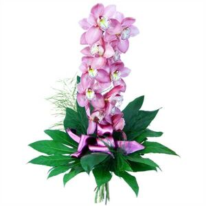 Orchid- elegance and finess.